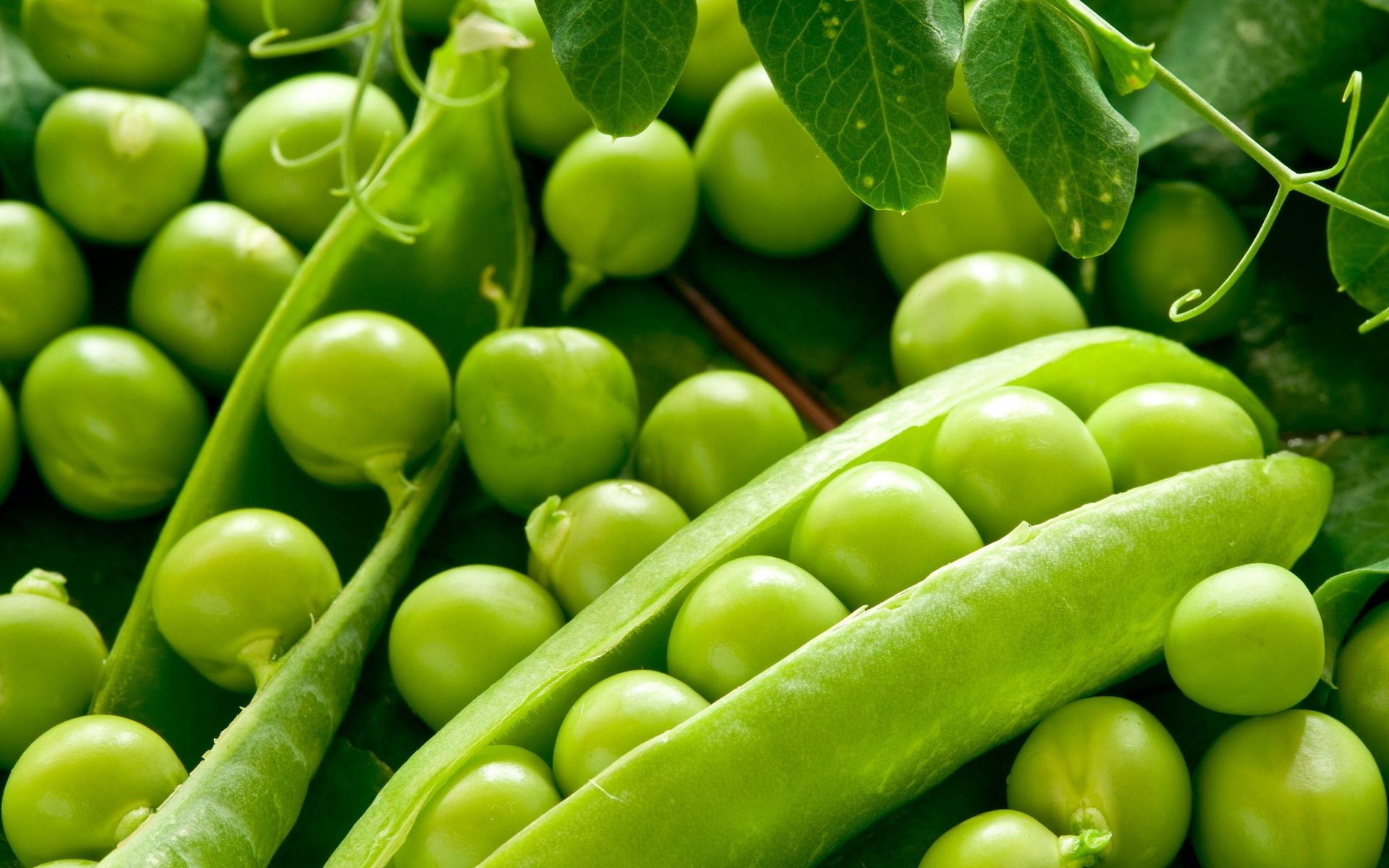 Coltivare Piselli In Vaso coltivazione piselli - coltivazione ortaggi - come coltivare