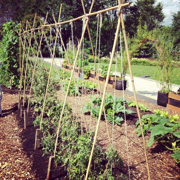 Coltivazione pomodori coltivazione ortaggi come for Bamboo coltivazione