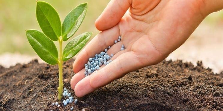 fertilizzanti manioca