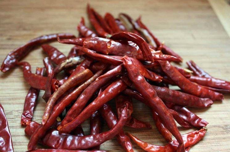 variet� di peperoncini: peperoncino de Arbol