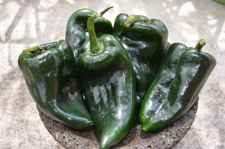 peperoncino poblano verde