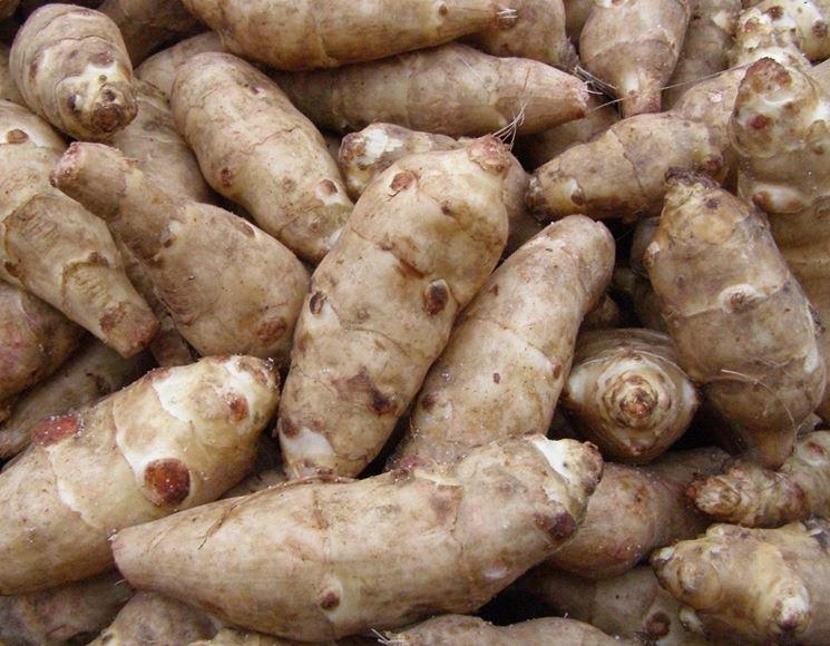 Topinambur coltivazione coltivazione ortaggi coltivare - Compost casalingo ...