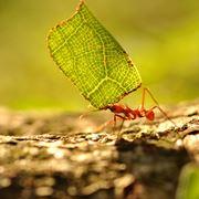 formiche nell orto