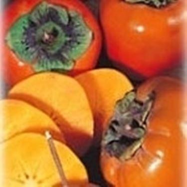 frutti di kaki