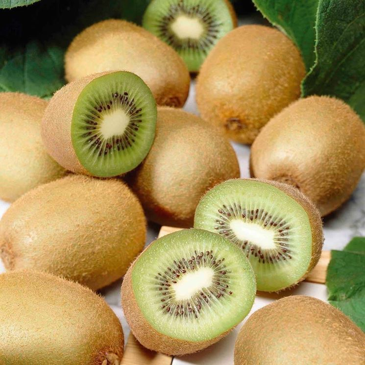 Coltivare kiwi in vaso domande e risposte orto e frutta for Kiwi pianta