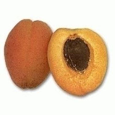 Albicocche mature