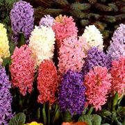 tutti i fiori