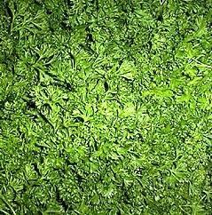 Prezzemolo con parassita domande e risposte orto e frutta for Pianta kiwi prezzo