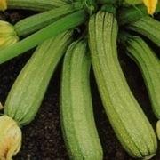 zucchine