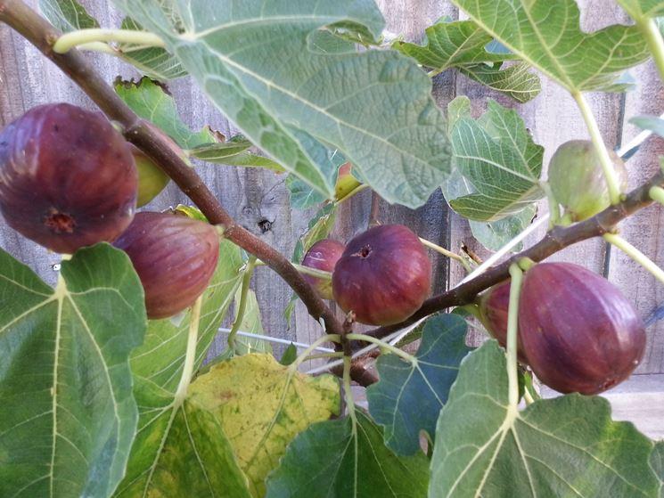 Alberi da frutto frutteto alberi con frutti for Piante da frutto che resistono al freddo