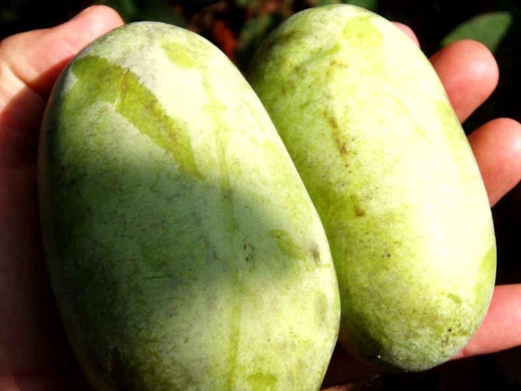 Asimina triloba frutteto coltivazione banano - Pianta banano ...