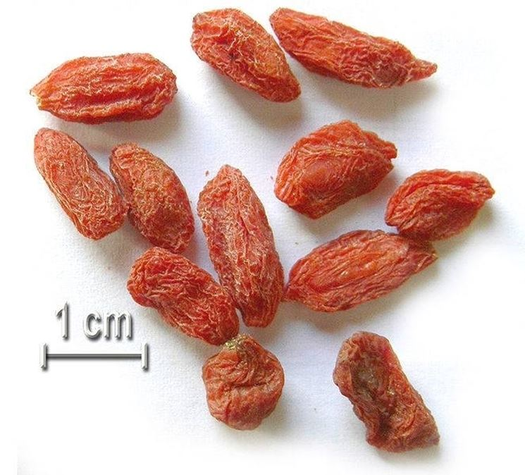 Quotidianamente le bacche Goji
