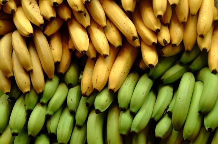 Alberi banano