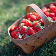 coltivare le fragole