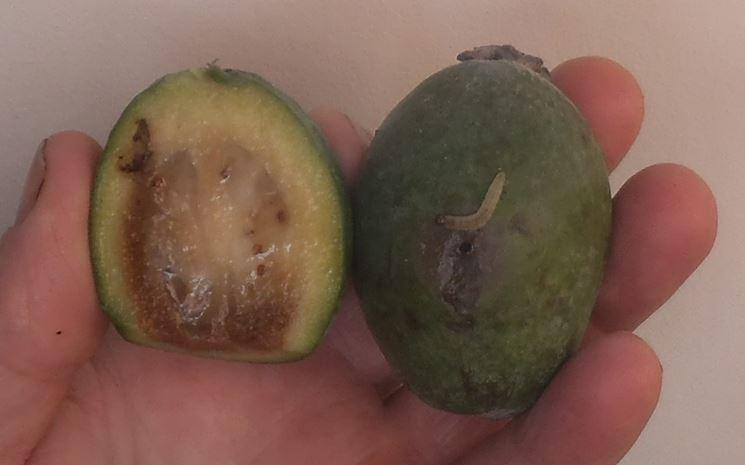 Parassiti frutto