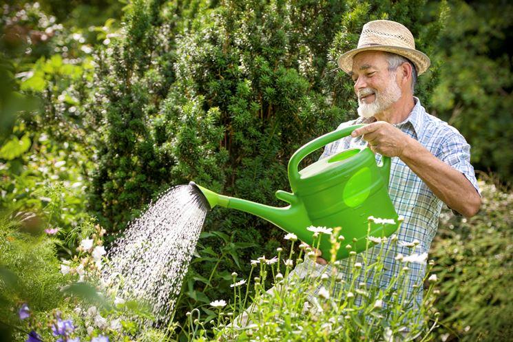 Irrigazione Garcinia