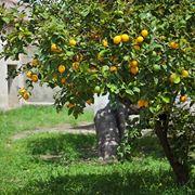 Ramo di limoni