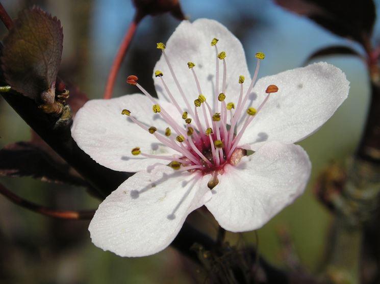 Fiore albero frutto