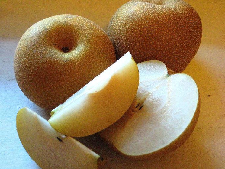 Pianta frutto asiatico