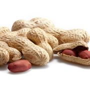 pianta di arachidi