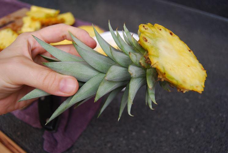 Il frutto della pianta di ananas