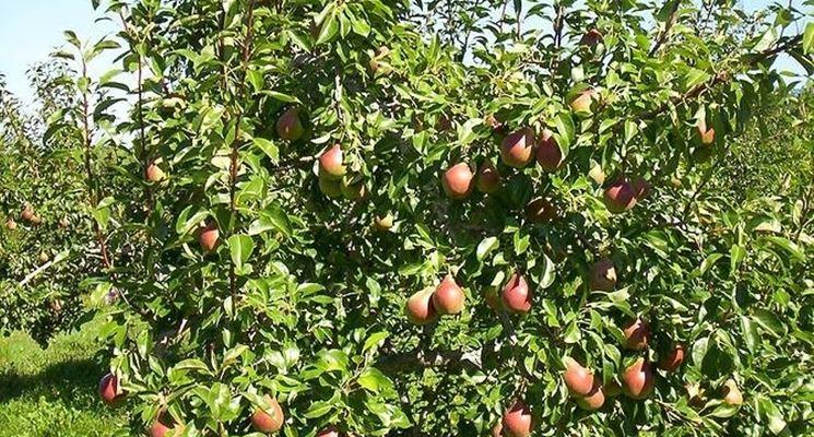Concime Per Piante Da Frutto : Piante da frutta frutteto