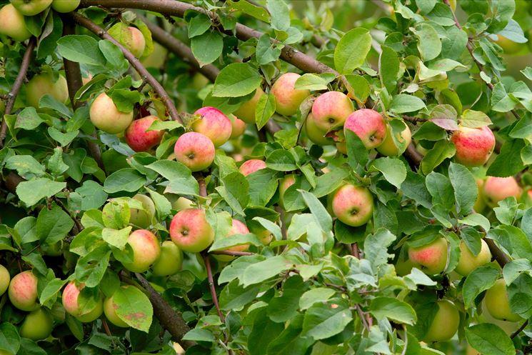 piante da frutta frutteto coltivare piante da frutta