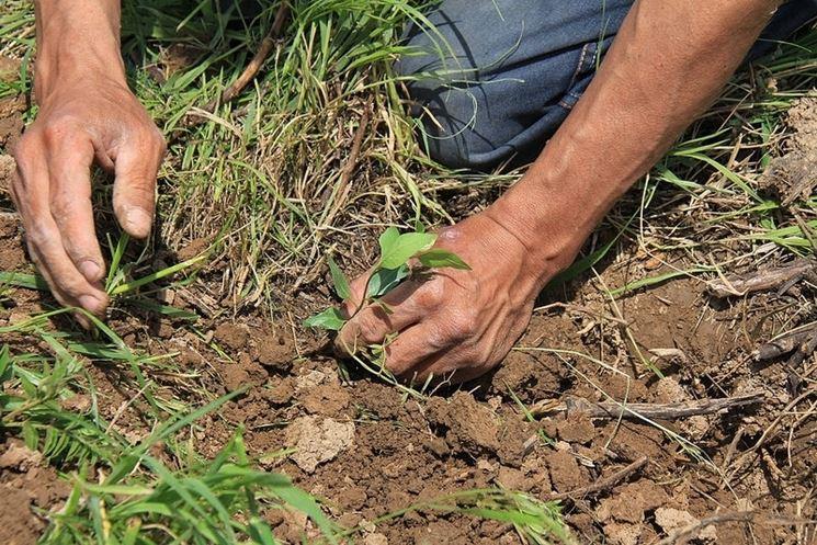 Preparare terreno coltivazione