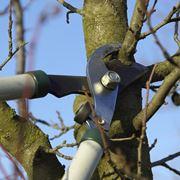 potatura alberi frutto