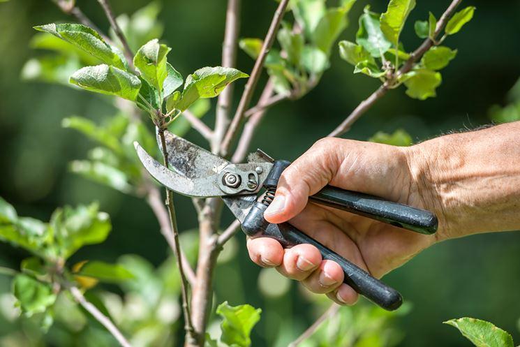 Potatura alberi frutto - Frutteto - Potare piante da frutto