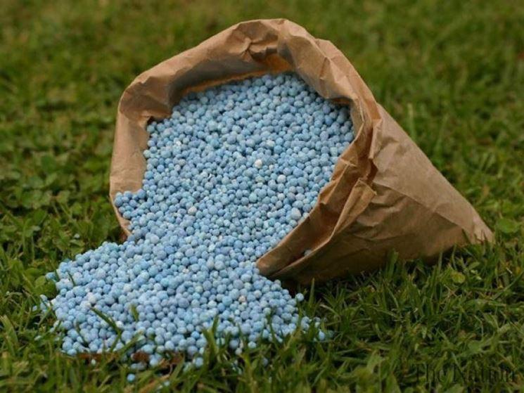 Coltivazioni fertilizzanti