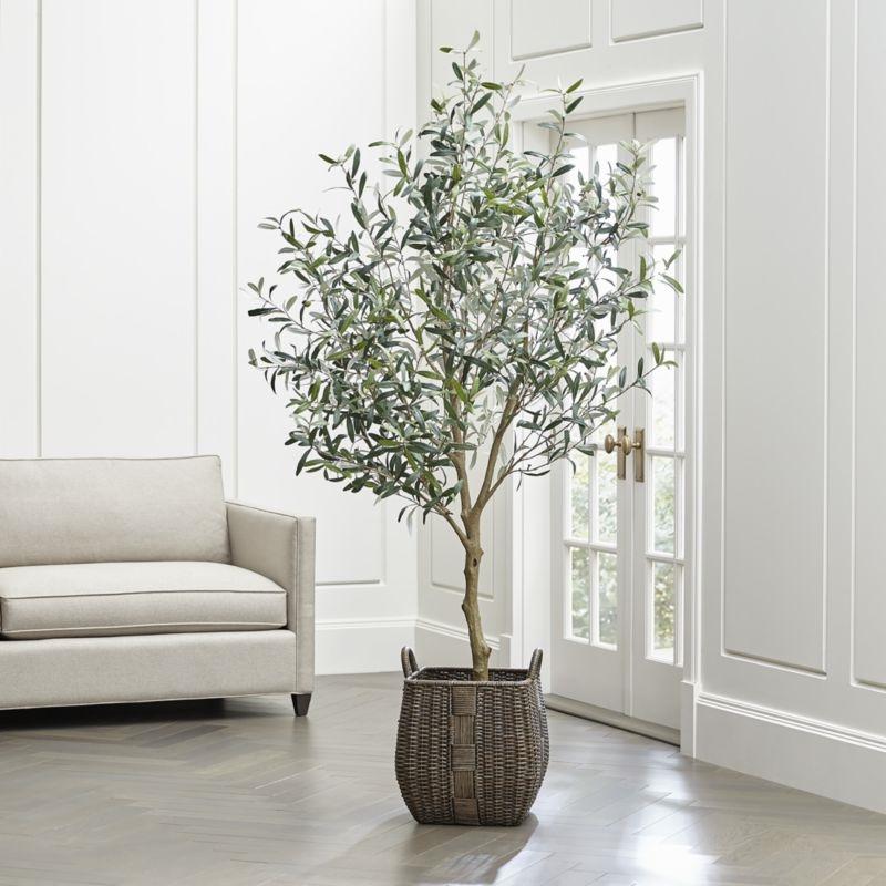 Ulivo in vaso frutteto coltivazione ulivo in vaso for Vasi per bonsai prezzi
