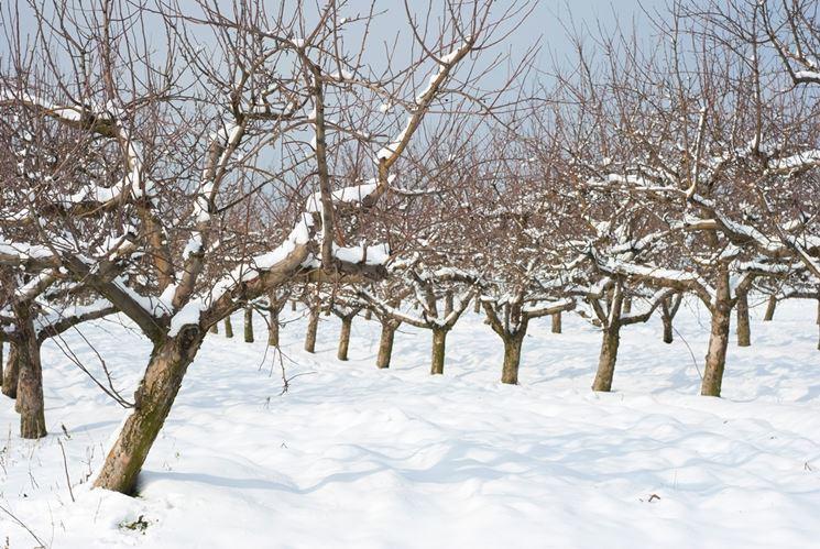 frutteto in inverno
