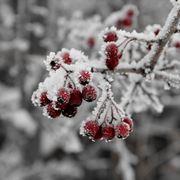 piante da frutto neve