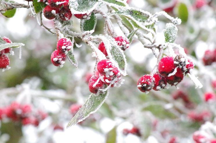 albero da frutto inverno