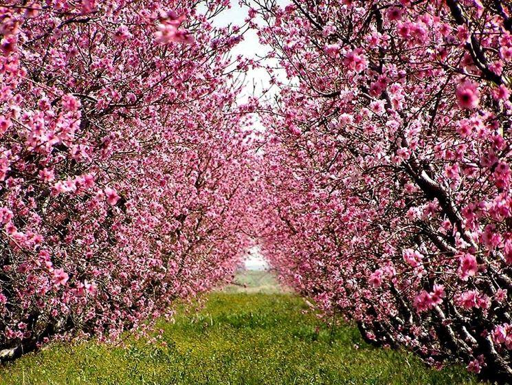 frutteto maggio