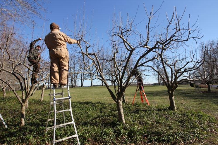 poatatura primaverile piante da frutto