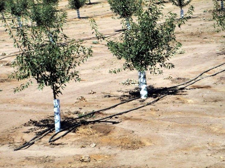 irrigazione piante da frutto