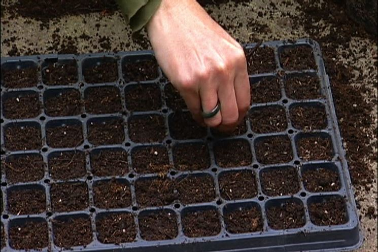 semina in inverno