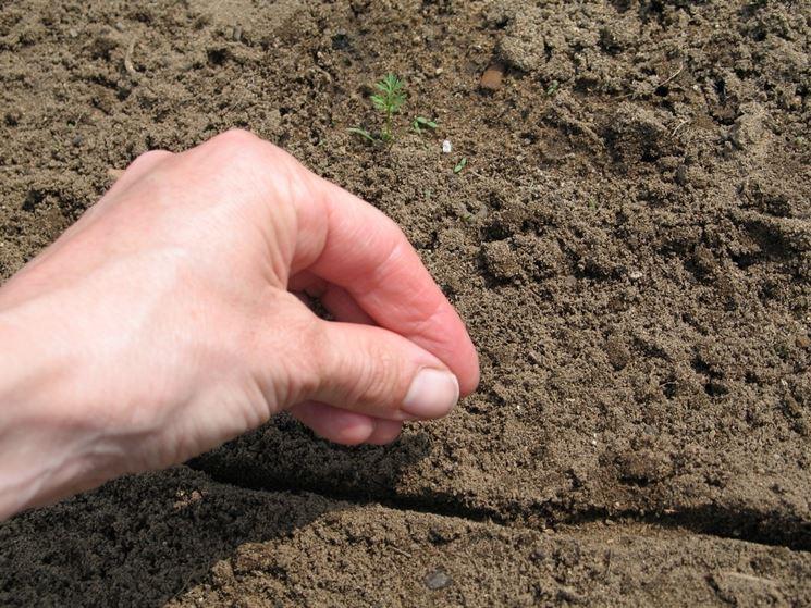 semina orto