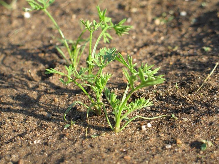 coltivare orto