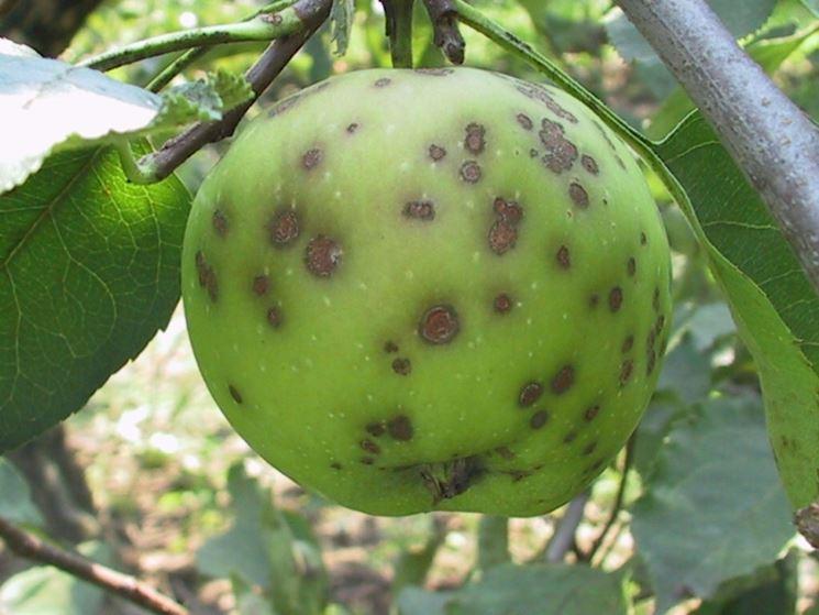 Esempio di danni causati sul frutto