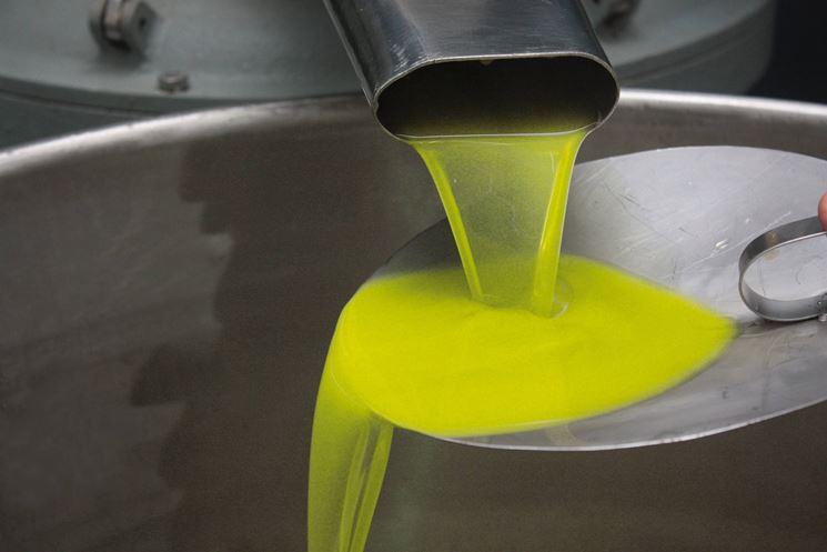 Olio di oliva Cipressino appena prodotto