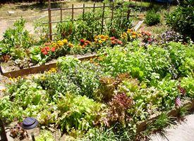 Coltivare orto biologico