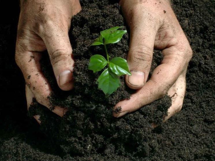usare <em>fertilizzante</em> biologico