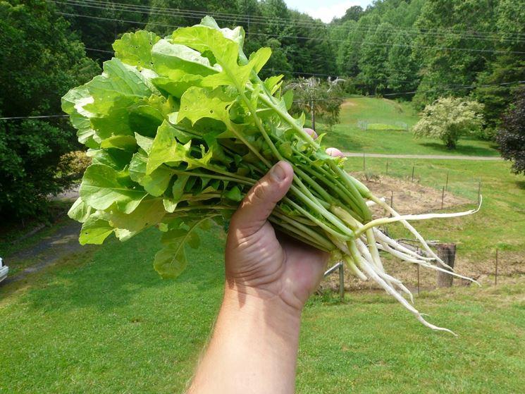 Agricoltura naturale orto