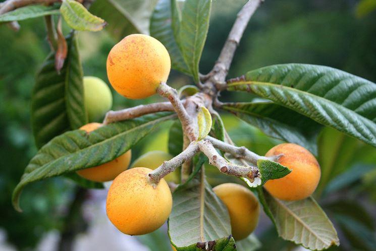 Agricoltura naturale nel nostro frutteto