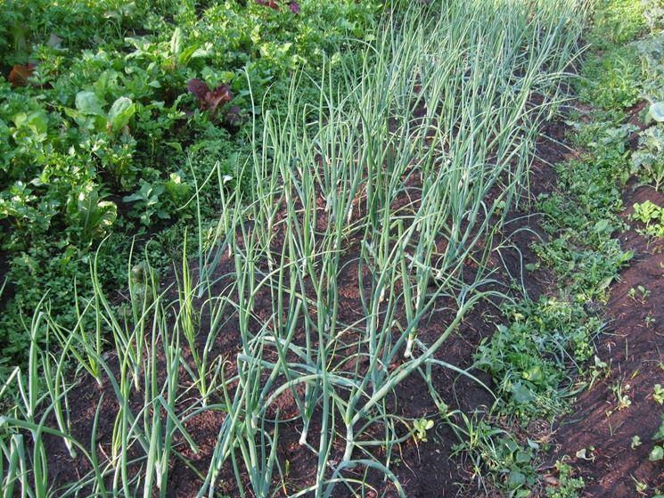 coltivare con agricoltura naturale