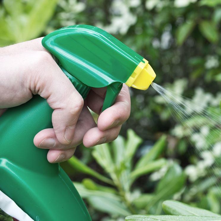 usare insetticida biologico