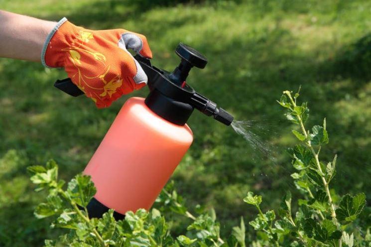 utilizzare insetticidi biologici